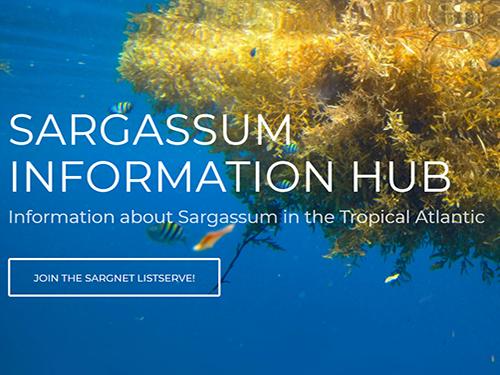 Sargassum Information Hub website
